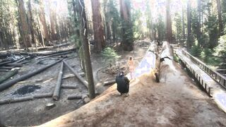 Freaky Fun in the Giant Redwood Trees